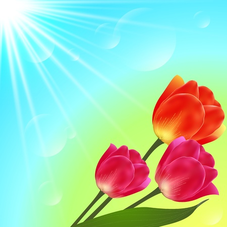tulips isolated on white background: Vector sunny tulip flowers bouquet card template