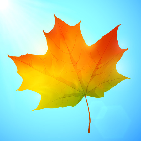 Golden autumn bright realistic vector leaf in a blue sky Vector