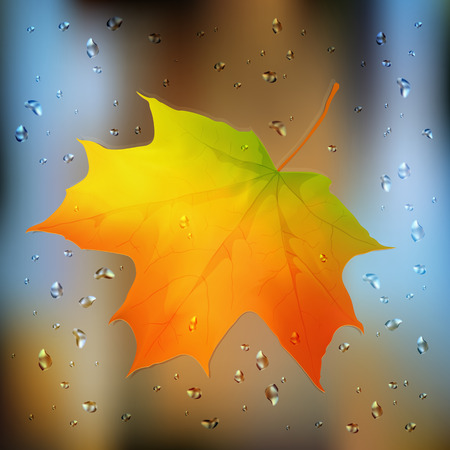 wet leaf: Autumn orange vector realistic leaf on wet glass