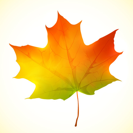 Isolated autumn bright vector paper maple leaf