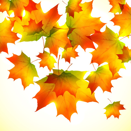 Autumn falling down orange foliage vector background Vector