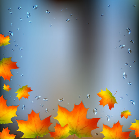 condensate: Autumn foliage on wet window with place for your text, vector background