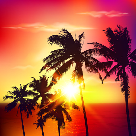 red sunset: Vector palm silhouettes on red summer sunset