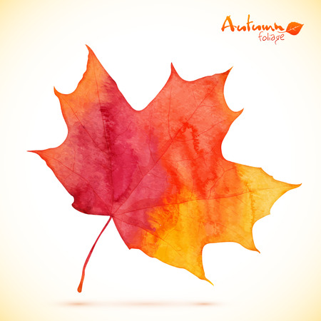 fall leaves: Watercolor red maple vector leaf
