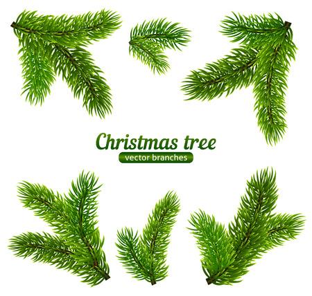 pine needles: Vector Christmas tree branches