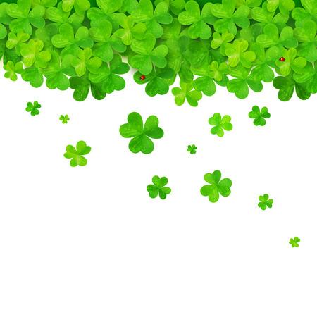 shamrock clovers: Vector green falling clovers on white background Illustration