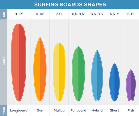 malibu: Surfing boards types vector infographic