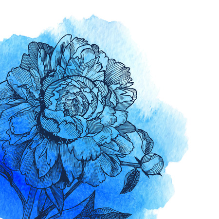 Ink drawn vector peony at blue watercolor background