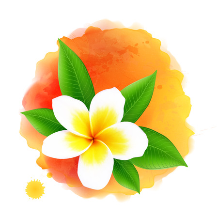 Vector frangipani or plumeria flower on orange watercolor background