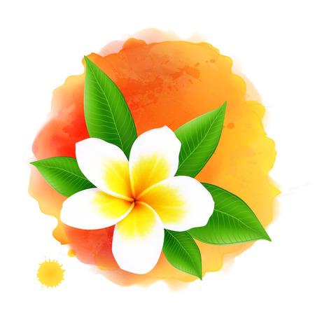 plumeria flower: Vector frangipani or plumeria flower on orange watercolor background