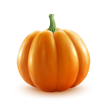 close: Bright orange vector realistic pumpkin isolated on white background Illustration