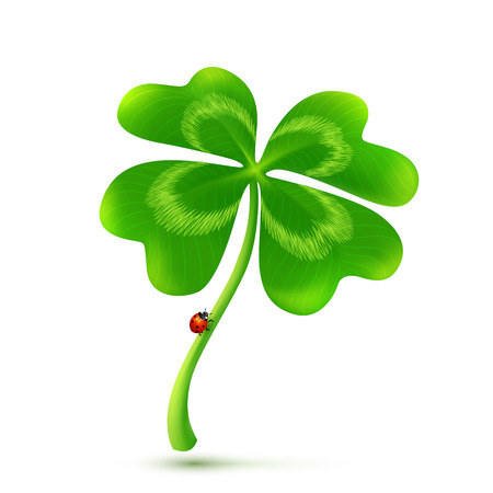 Vector four-leaf clover isolated on white background