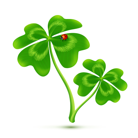 Couple of cartoon style four-leaf clovers with ladybug, vector illustration
