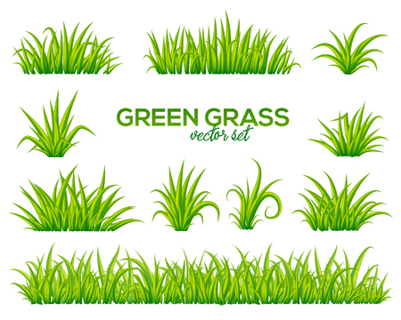 Vector tufts of grass set isolated on white background Çizim