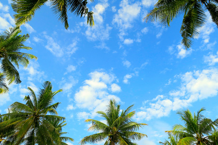 Green palms frame on bright blue sky with clouds, tropical photo background Фото со стока