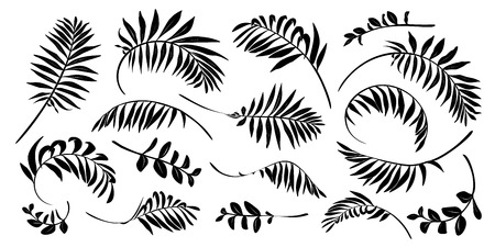 Black vector tropical leaves hand drawn silhouettes isolated on white background.