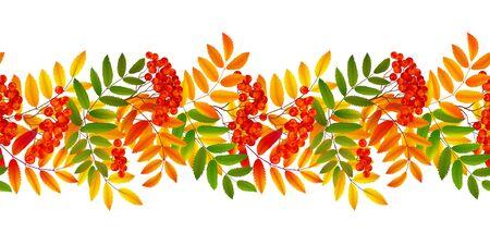 Bright colourful rowan berries and leaves autumn fall vector seamless border