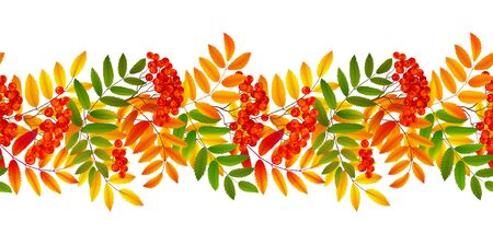 Bright colourful rowan berries and leaves autumn fall vector seamless border Illustration