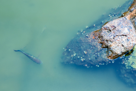 Over head view. The fish are in clear water and the small clams are clumped with rocks. Фото со стока