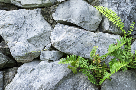 The stone wall and ferns out of the stone niche. Stock Photo
