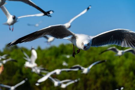 Close up view and shade. Several seagulls spread wings to fly beautifully along the coast.