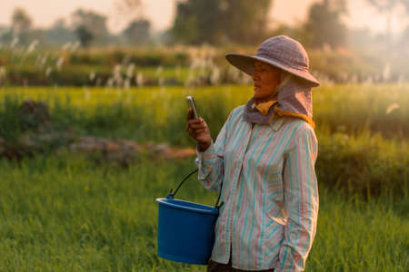 Low light view with flare be side. Asian farmer woman stand and look at the phone in hand. In rice paddy field of Thailand. Get the warm evening sunshine on the meadow.