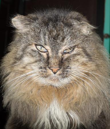 animal body part: matured evil cat
