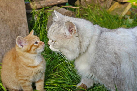 Cat and kitten on the grass Stock Photo