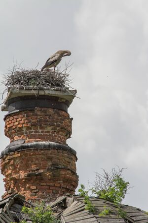 Travel to Russia. Stork on the ruined dome of the church, Summer Russia.
