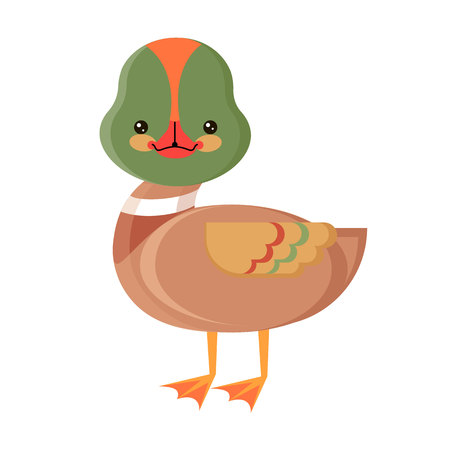 vector picture duck on  white background.