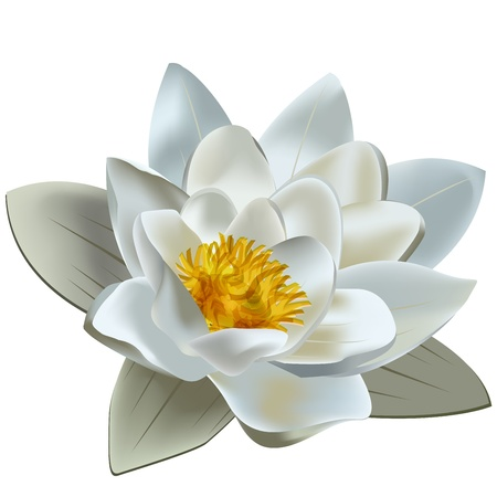 Light colors lotus on white background  Illustration