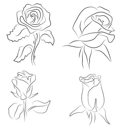 etching pattern: Set of four sketched of roses on white background Illustration