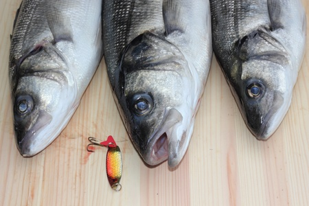 freshly rod caught sea bass,a delicacy of the British Isles Stock Photo - 17147768
