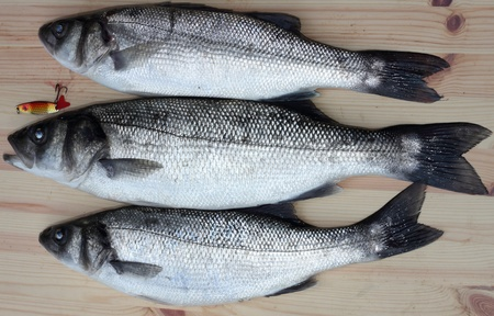 freshly rod caught sea bass,a delicacy of the British Isles Stock Photo - 17147775