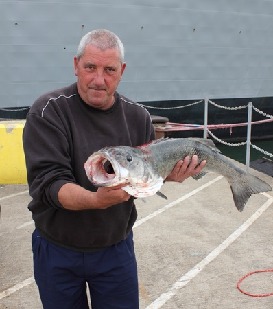 A fisherman with a rod caught specimen seabass at portsmouth dockyard,weighing 15lb photo