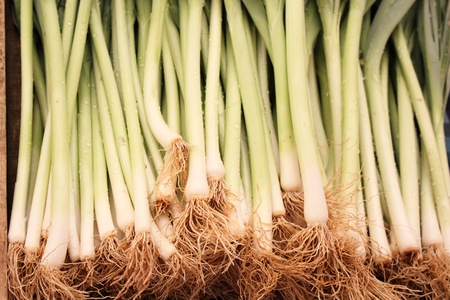 Fresh produce of spring onions for sale at a market photo