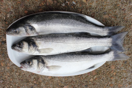 Sea bass photo