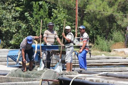 rearing of fish: TURKEY,JULY 2013 - Men working on a trout farm in turkey Editorial