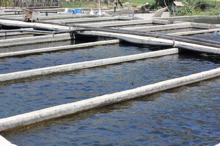 fish rearing: TURKEY,JULY 2013 -  A  trout farm in turkey