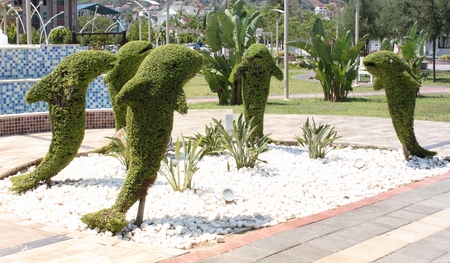 topiary: Topiary, dolphines