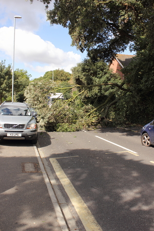 high winds: A fallen tree across the road during high winds in portsmouth, england, 21st august 2014 Editorial