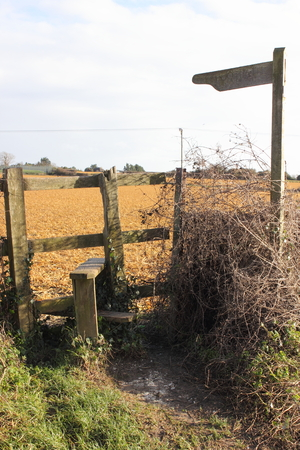rungs: A stile are steps or rungs by which a person may pass over a fence that remains a barrier to sheep or cattle.Stiles are often built in rural areas