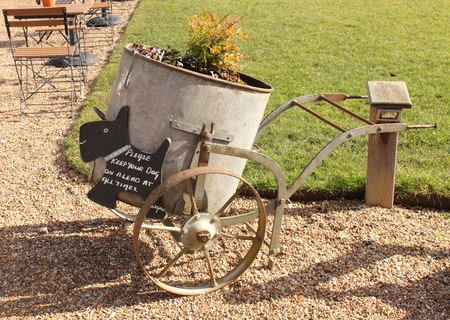 Vintage wheelbarrow with flowers planted inside photo
