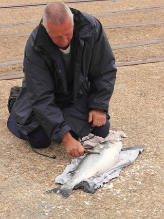 dockside: A fisherman descaling a large bass on the dockside