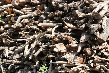 kindling: A stockpile of small kindling fire wood Stock Photo