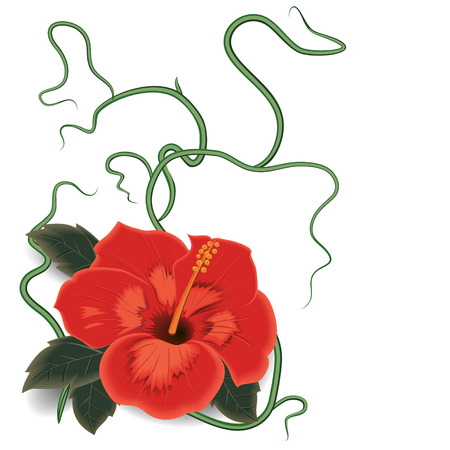 Red hibiscus with leaves and stems on an isolated white background Illustration