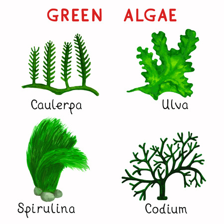 Collection watercolor green algae isolated on white background Illustration