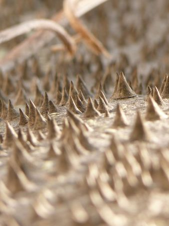 close up of a chorisia speciosa bark seem a moons landscape Stock Photo