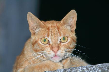 posing cat Stock Photo - 1354272
