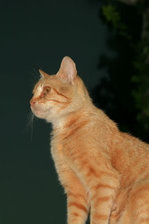 lookout cat Stock Photo - 1354271